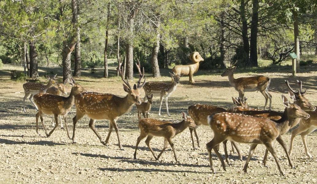Image Parc de Coulondres Philippe Eldridge