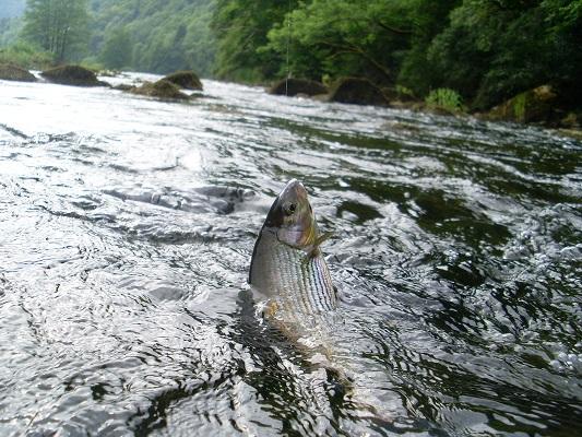 Image Guide de pêche