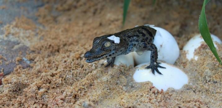 Image La Ferme aux Crocodiles