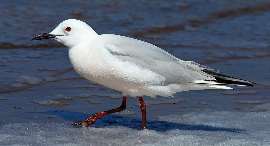 Image Sortie découverte des oiseaux des salins d'Hyères