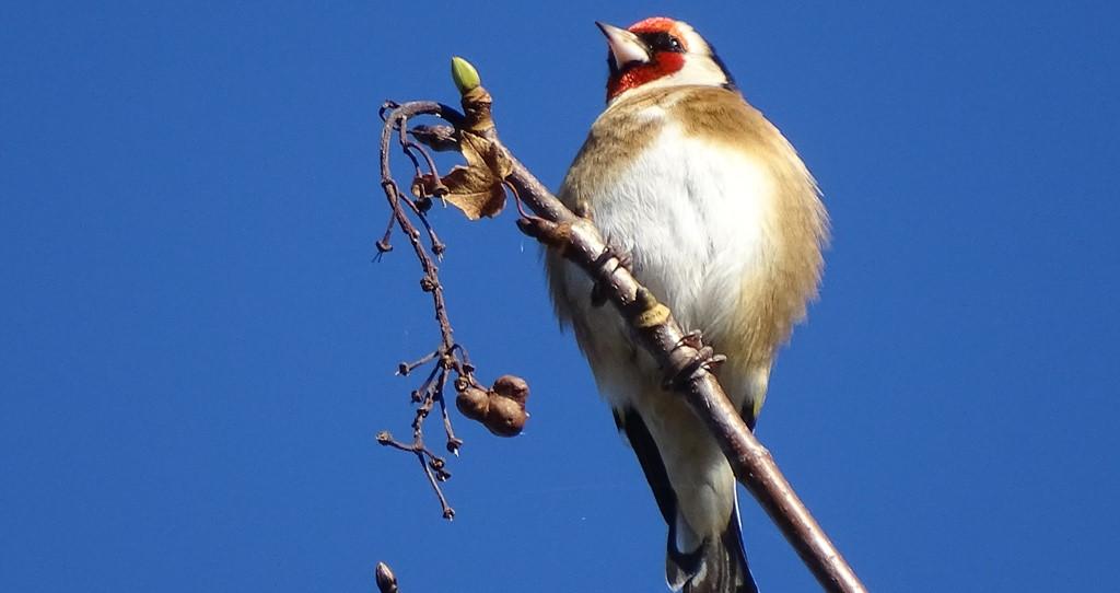 Image Sortie ornithologique à l'Île de loisirs de Jablines Annet