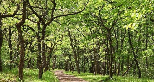 Image Jeu de piste au coeur de la forêt