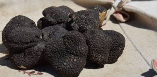 Image Présentation du marché aux truffes - Carpentras