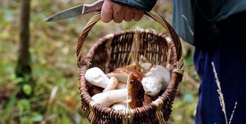 Image Séances de détermination de champignons