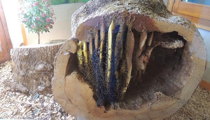 Image L'abeille du Haut Doubs