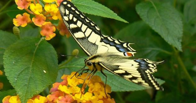 Image Jardin des papillons