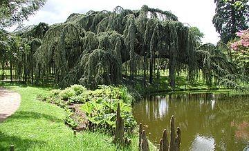 Image Arboretum de la Vallée Aux Loups