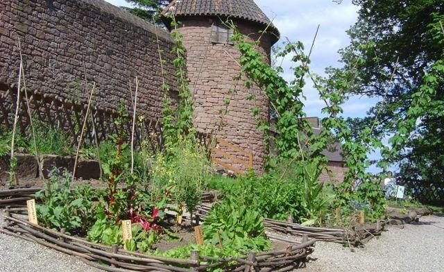 Image Jardin médiéval du château du Haut-Koenigsbourg