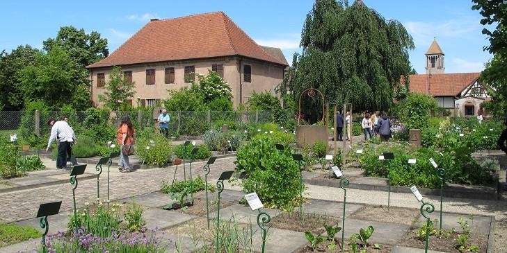 Image Eglise Saint-Trophime - Jardin monastique