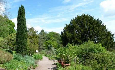 Image Le jardin botanique du col de Saverne