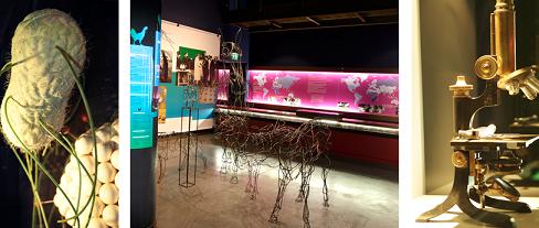 Image Musée de sciences biologiques Docteur Mérieux