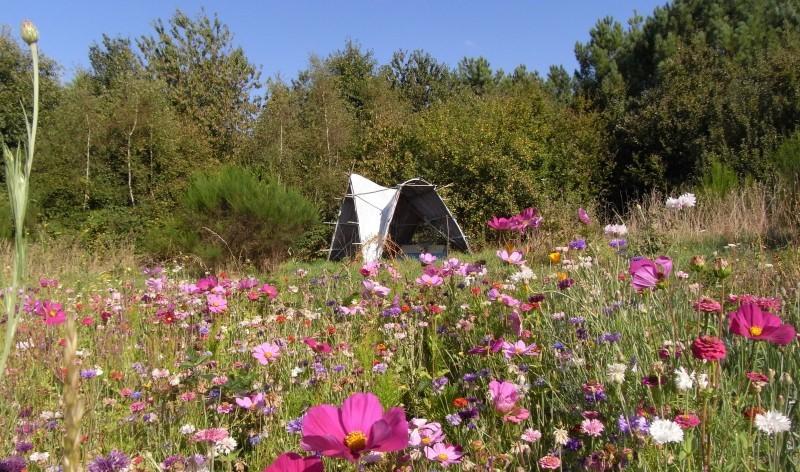 Image Les jardins de Koantiz