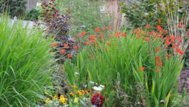 Image Jardin botanique et pédagogique