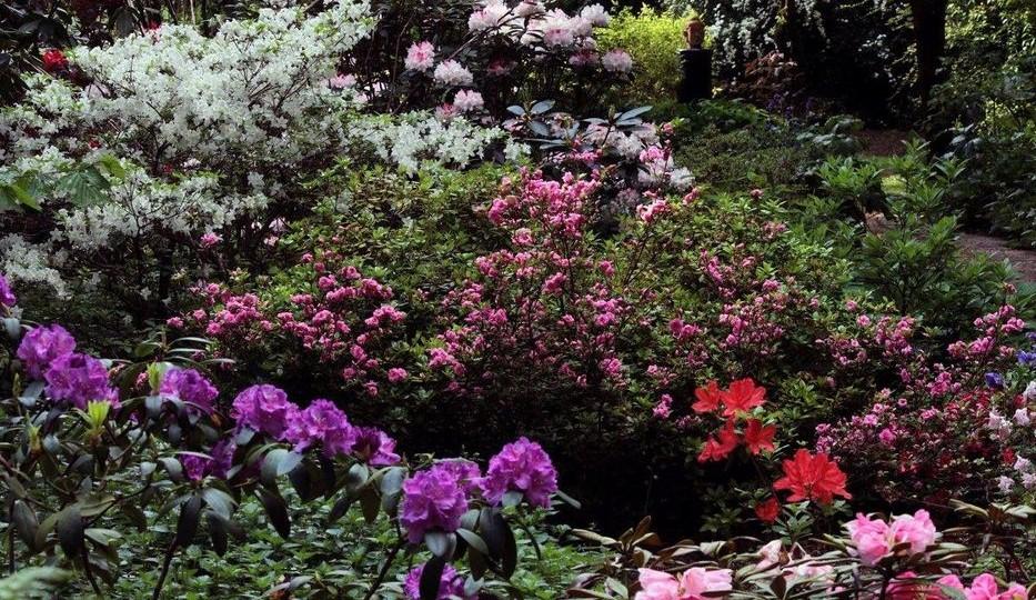 Image Le jardin du Séquoia