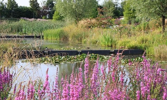 Image Parc floral - jardin des compagnons