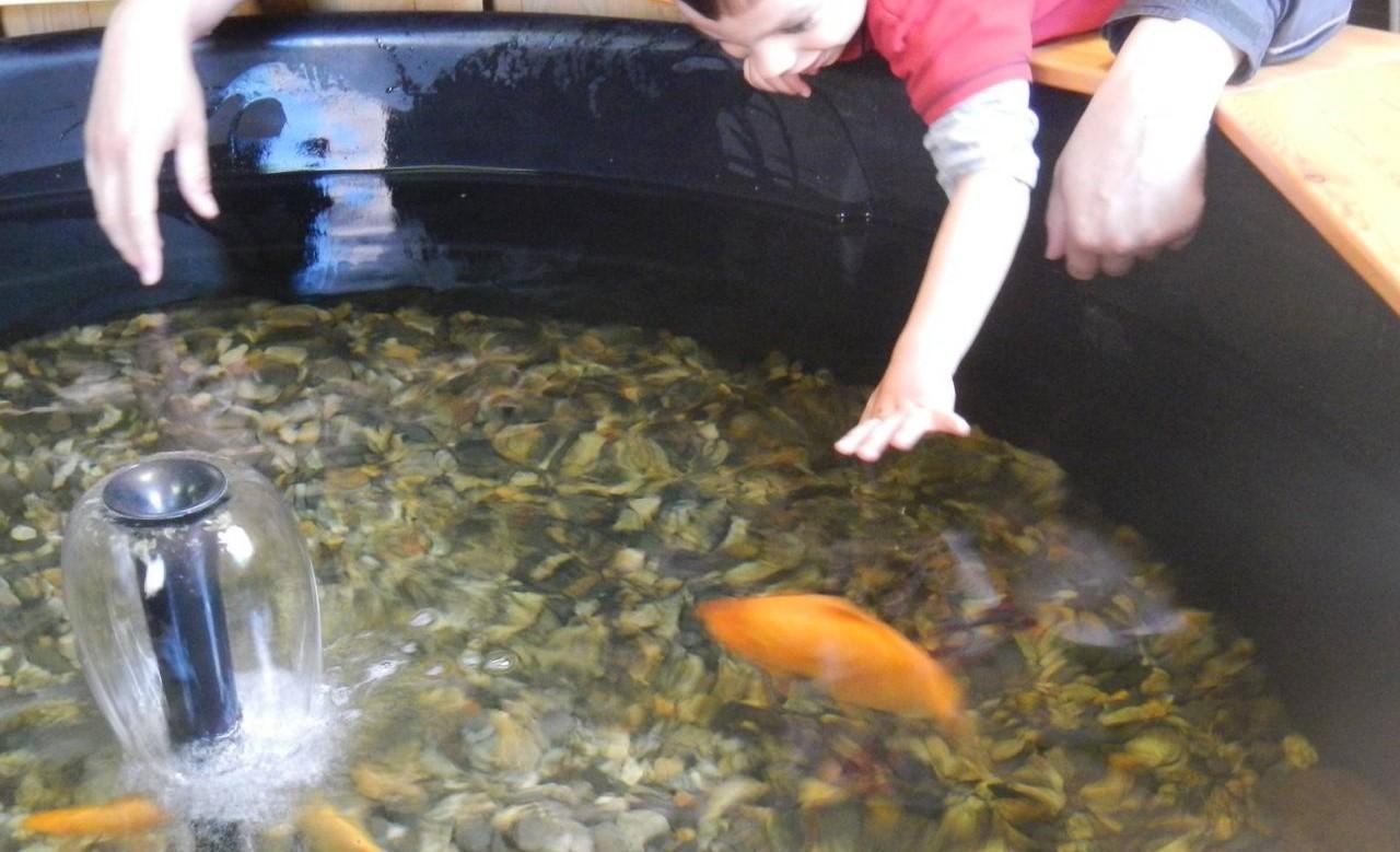 Image Aquarium La Maison du Saumon et de la Rivière