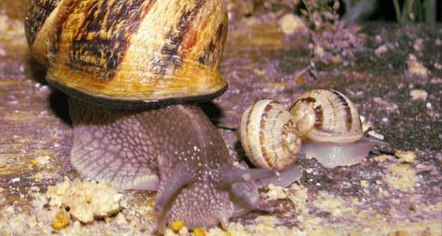 Image Le Jardin aux Escargots