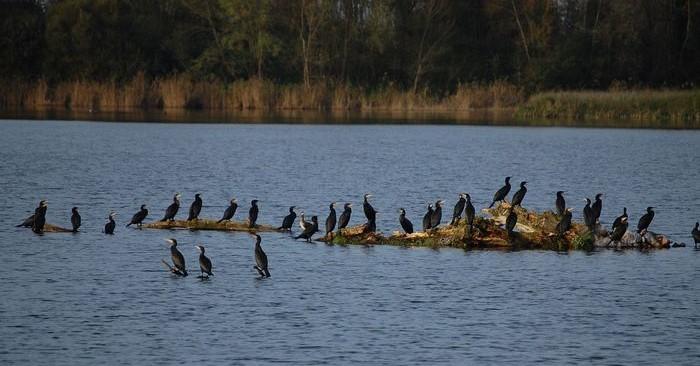 Image Les gravières de Mâtel via le sentier Loire Nature