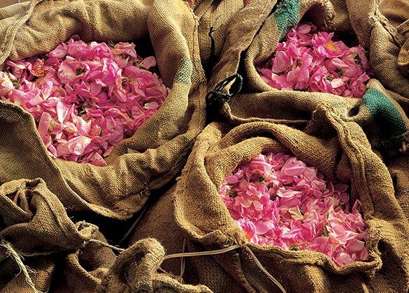 Image Musée du parfum