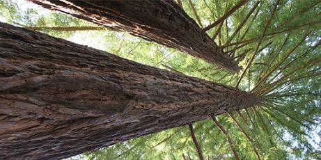 Image L'arboretum National des Barres