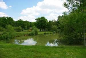 Image Les étangs de Romainville