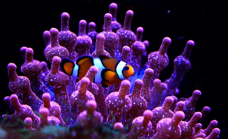 Image Aquarium de Lyon