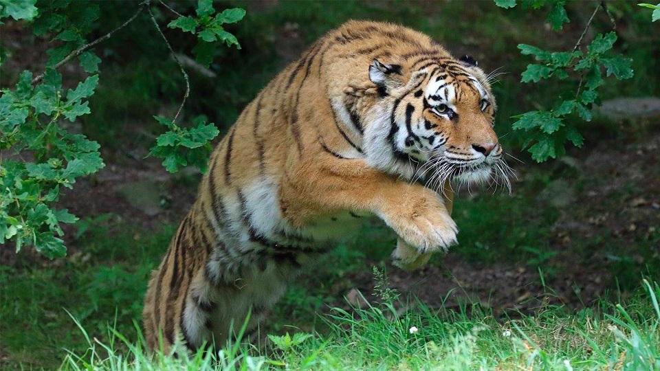 Image Zoo de Jurques