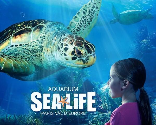 Image Aquarium Sea Life