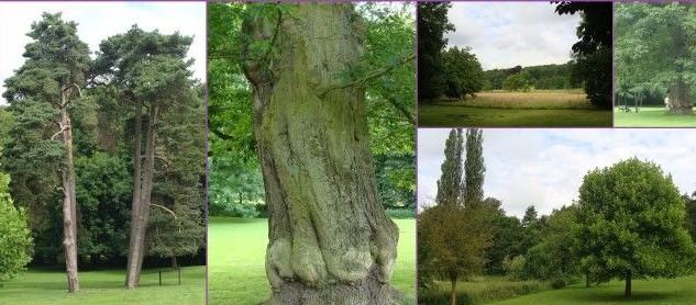 Image Arboretum de Monceau sur Sambre