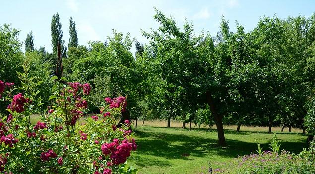 Image Jardin Botanique Jean Massart