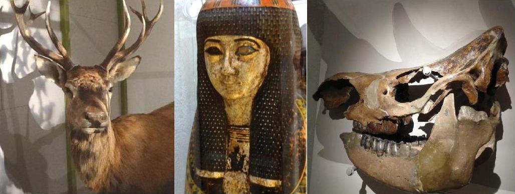 Image Muséum d'Histoire Naturelle et d'Ethnographie