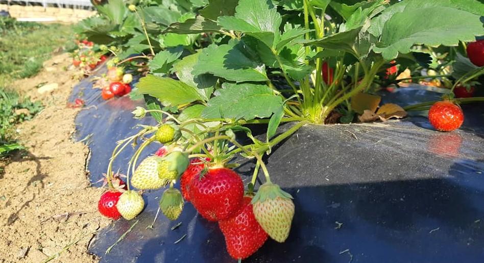 Image Les Petits Fruits de Vouxey