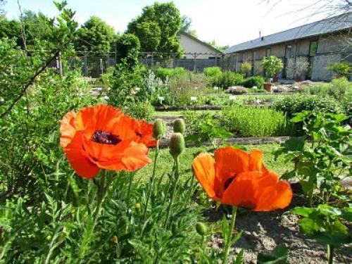 Image Conservatoire National des Plantes à Parfum, Médicinales et Aromatiques